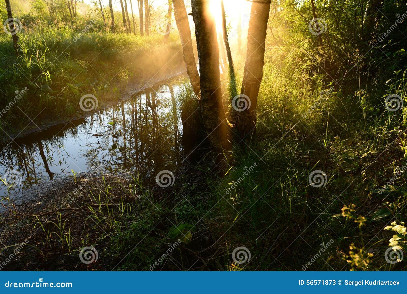 Download Ανατολή μέσω της ομίχλης σε έναν δασικό ποταμό το πρωί αρχών του καλοκαιριού Στοκ Εικόνα - εικόνα από χρώμα, γραφικός: 56571873