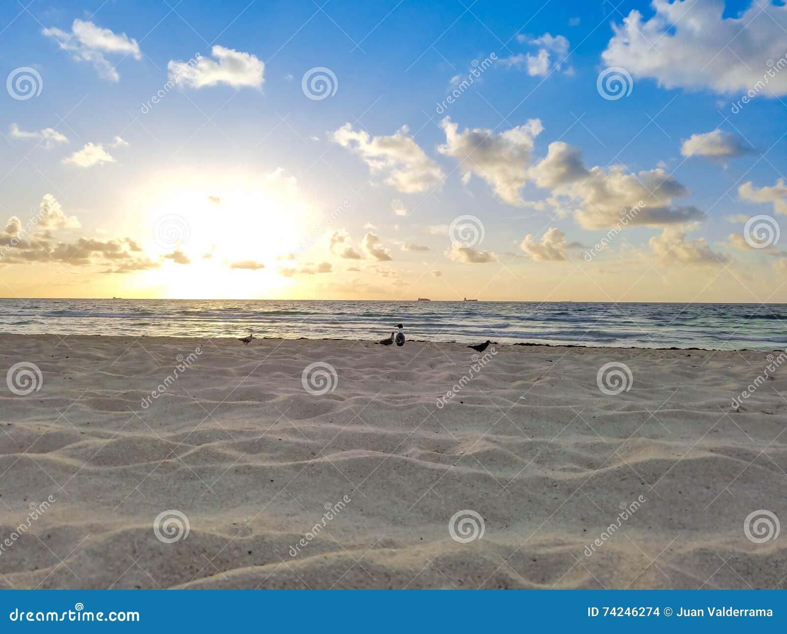 Ανατολή παραλιών με τα πουλιά, τον ωκεανό, την άμμο, τον ουρανό & τα σύννεφα