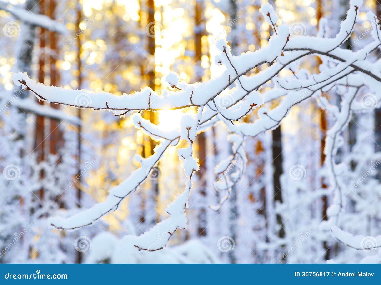 Ανατολή στο χειμερινό δάσος