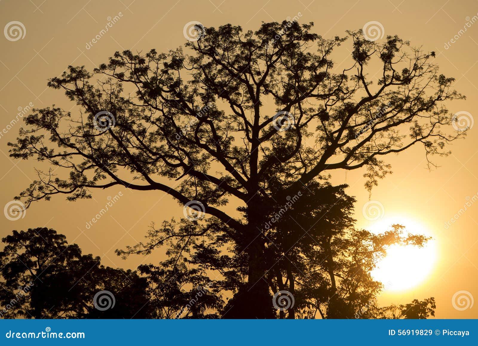Αναδρομικά φωτισμένος του δέντρου στον ποταμό Catatumbo κοντά στη λίμνη του Μαρακαΐμπο