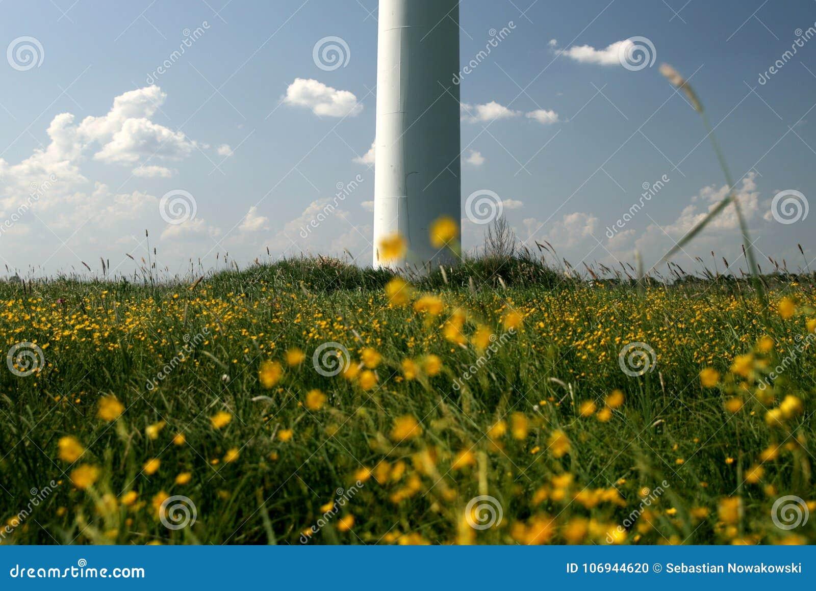 Ανεμοστρόβιλος στα λουλούδια τομέων