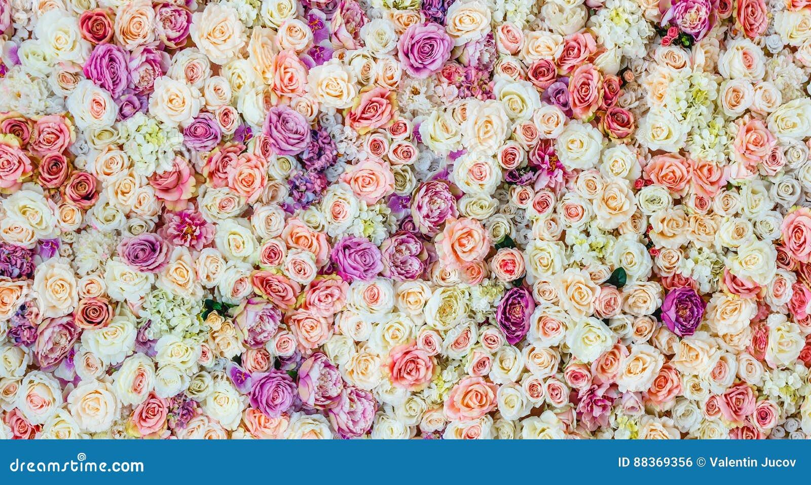 Ανθίζει το υπόβαθρο τοίχων με τα καταπληκτικά κόκκινα και άσπρα τριαντάφυλλα, γαμήλια διακόσμηση,