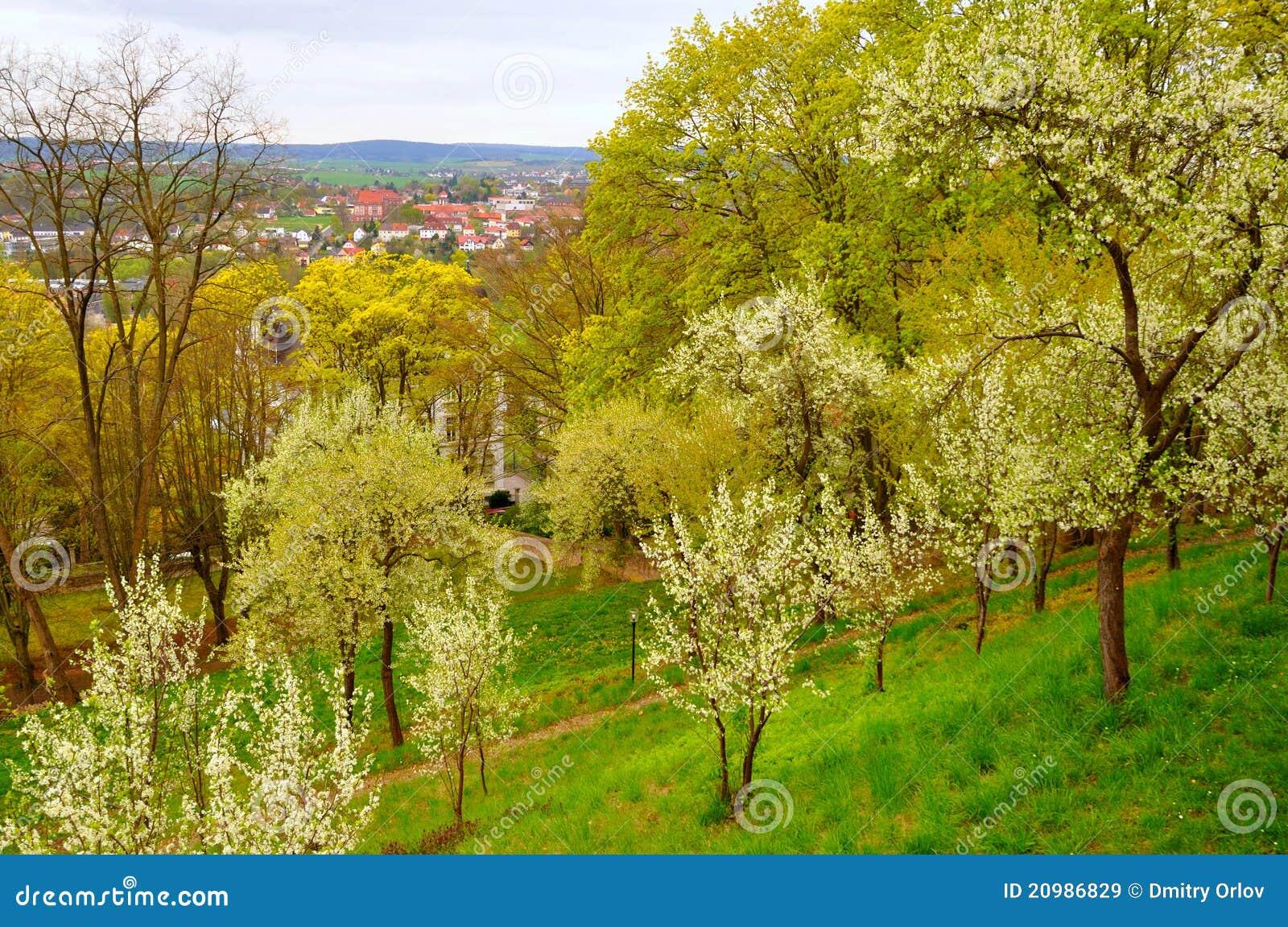 ανθίζοντας δέντρα κήπων κε&