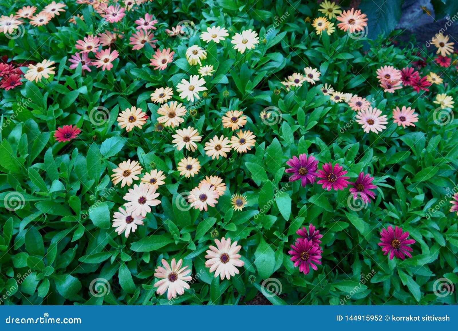 Ανθίζοντας λουλούδια και δέντρο στο θόλο λουλουδιών στους κήπους από