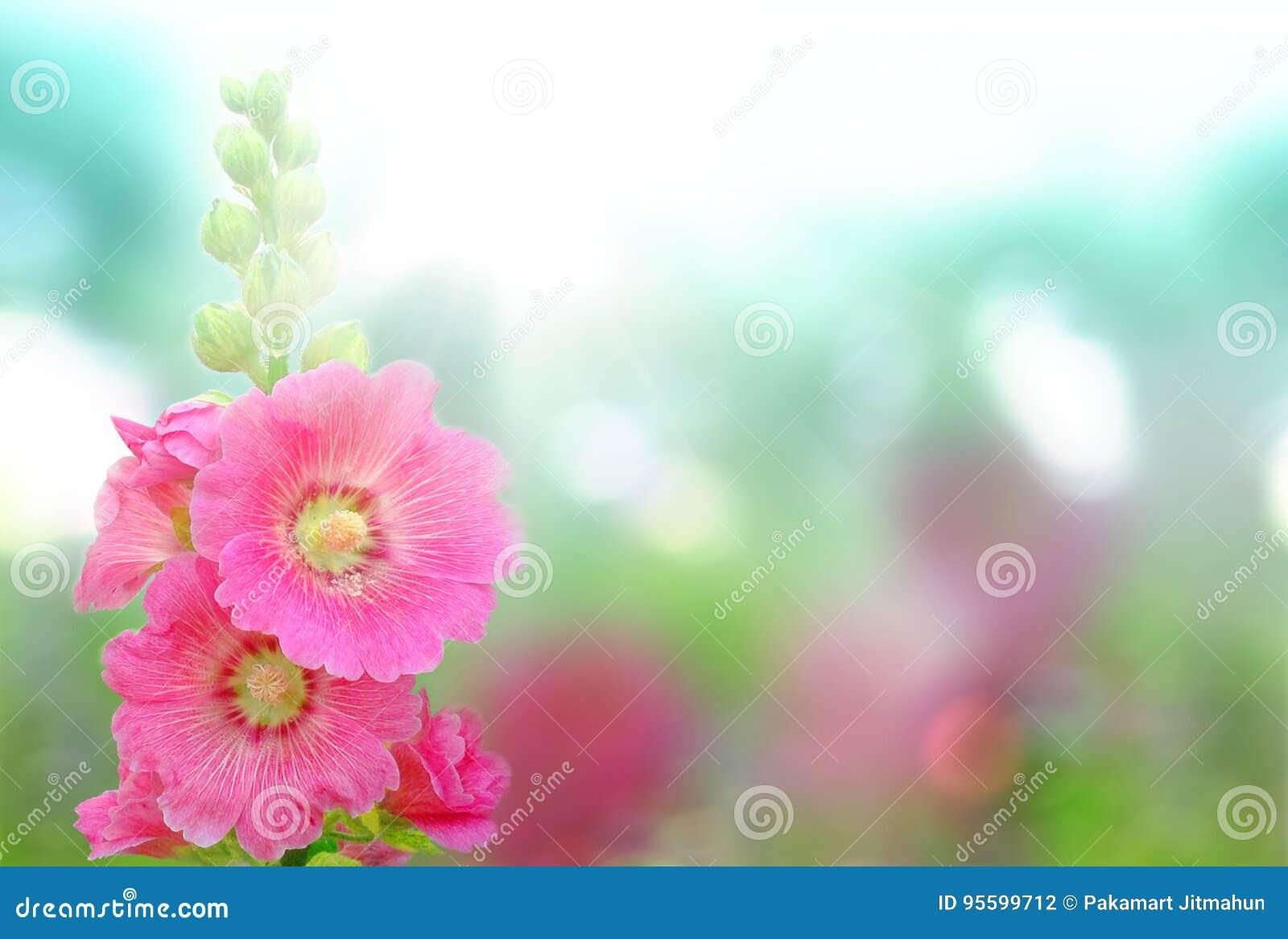 ανθίζοντας λουλούδια