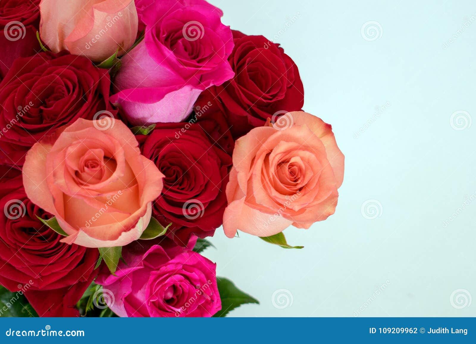 Ανθοδέσμη των κόκκινων και ρόδινων τριαντάφυλλων στο αριστερό στο λευκό