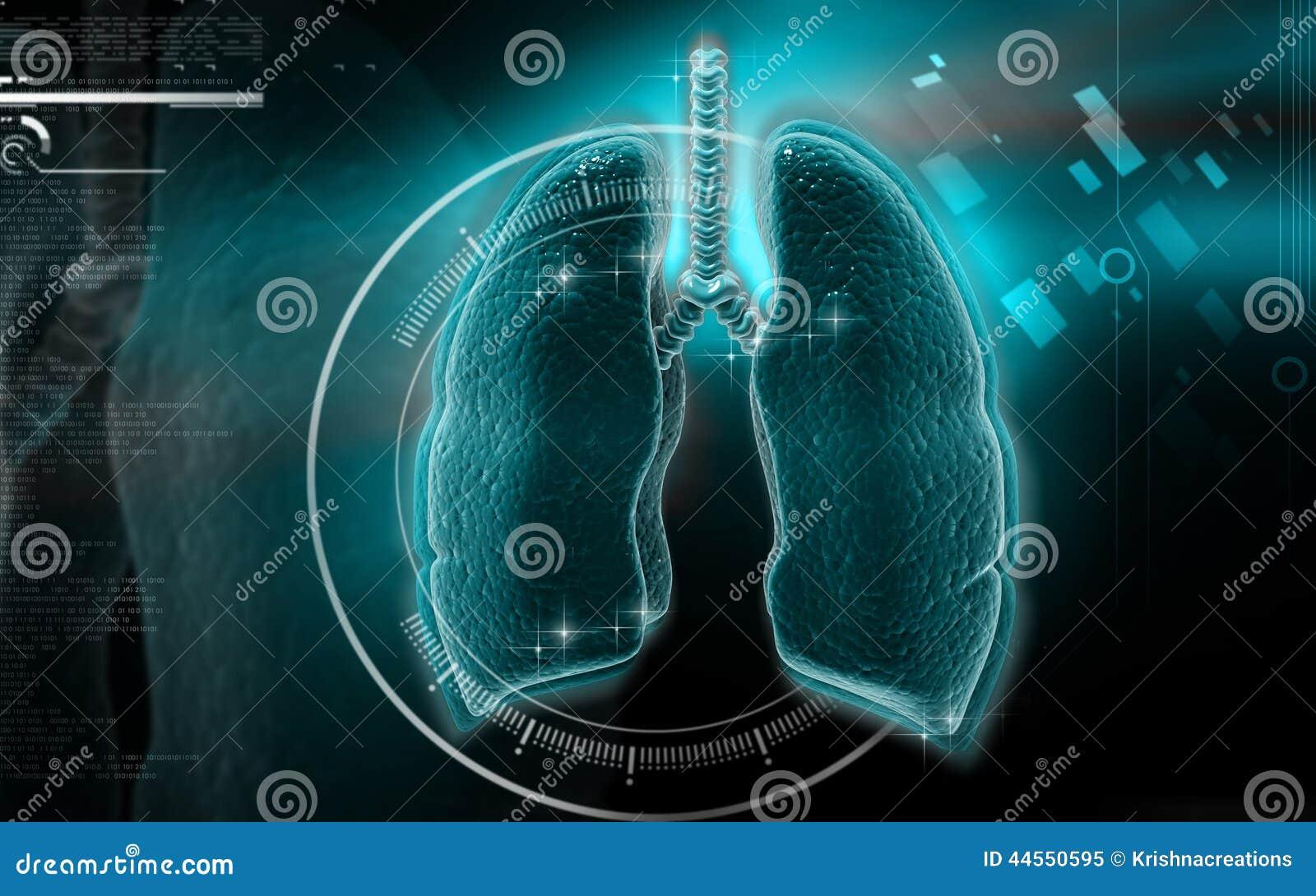 ανθρώπινοι πνεύμονες