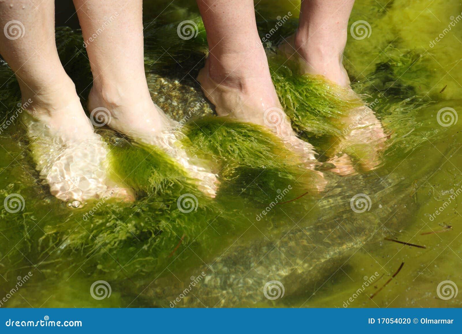 ανθρώπινο φύκι ποδιών