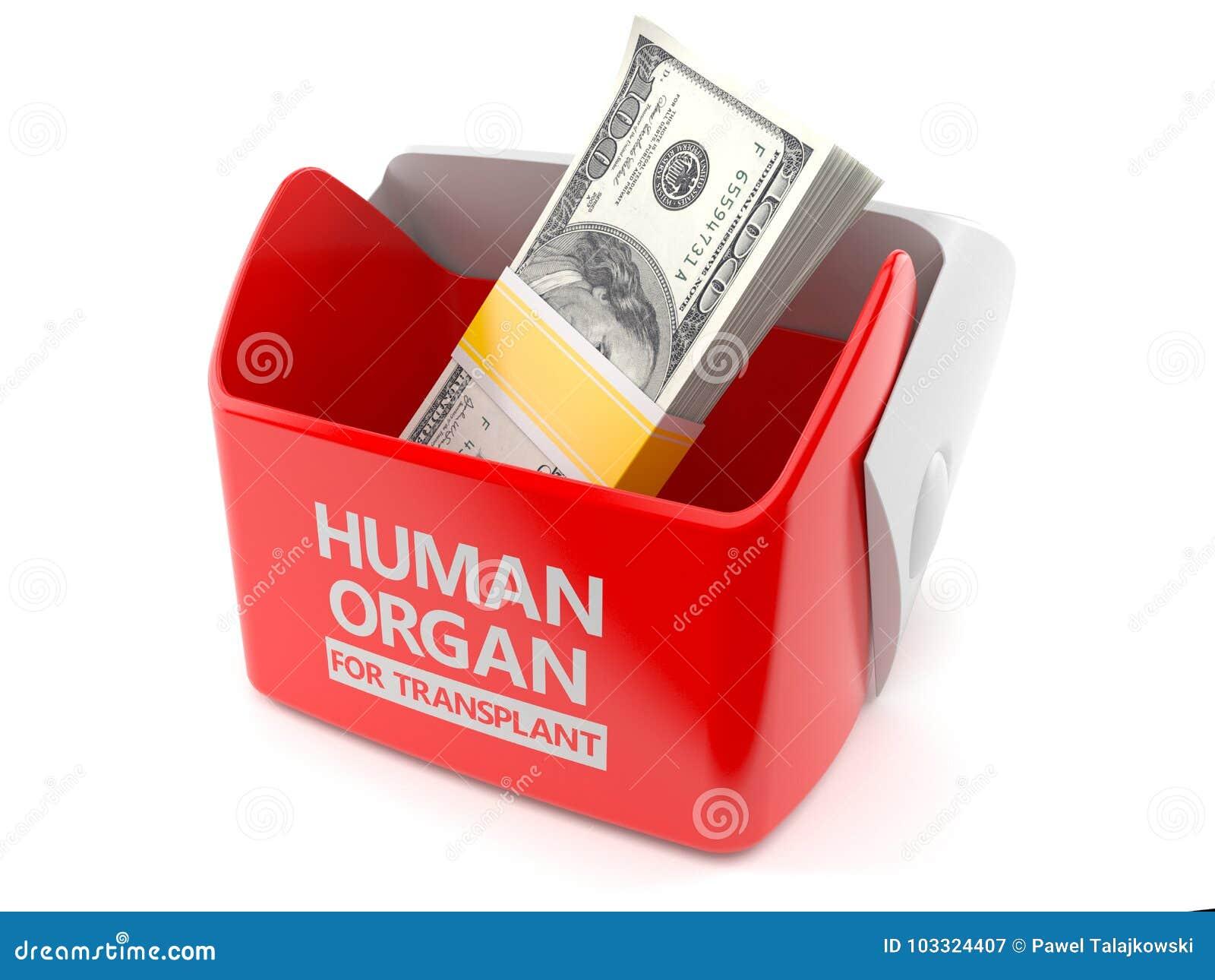 Ανθρώπινο όργανο για την έννοια μεταμόσχευσης