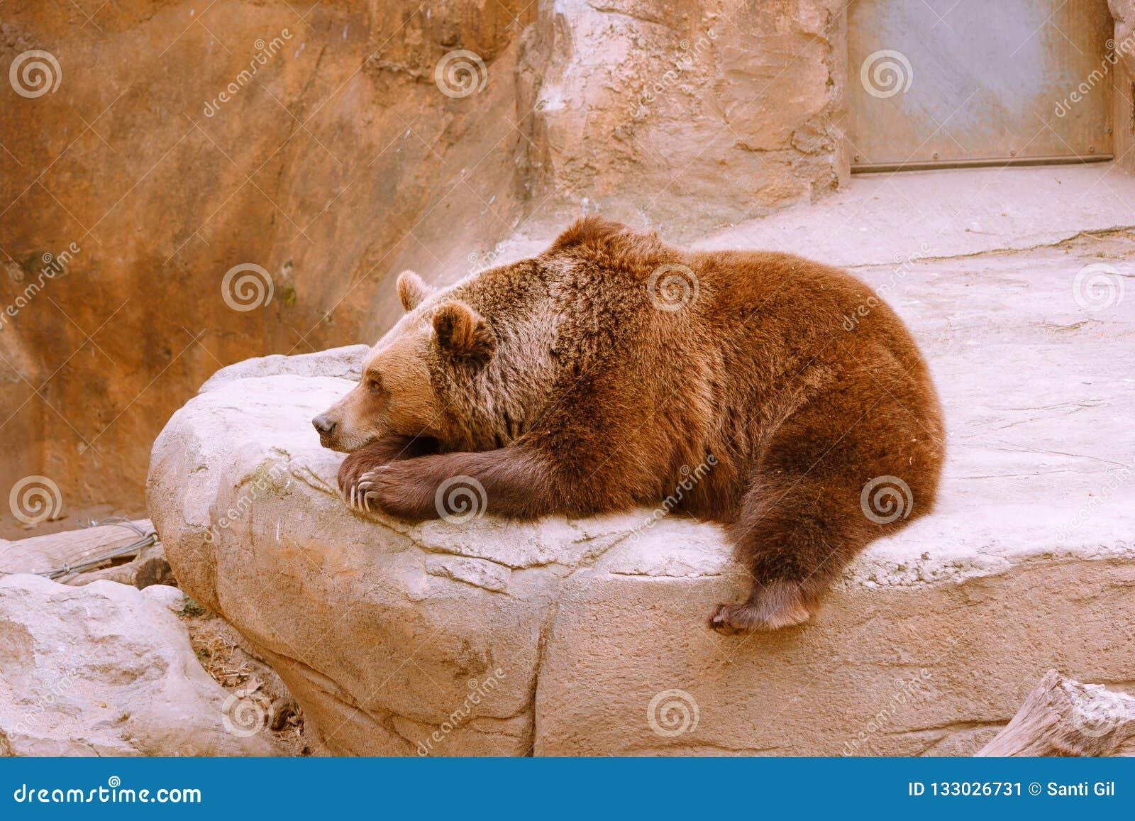 Αντέξτε στην πέτρα στο ζωολογικό κήπο