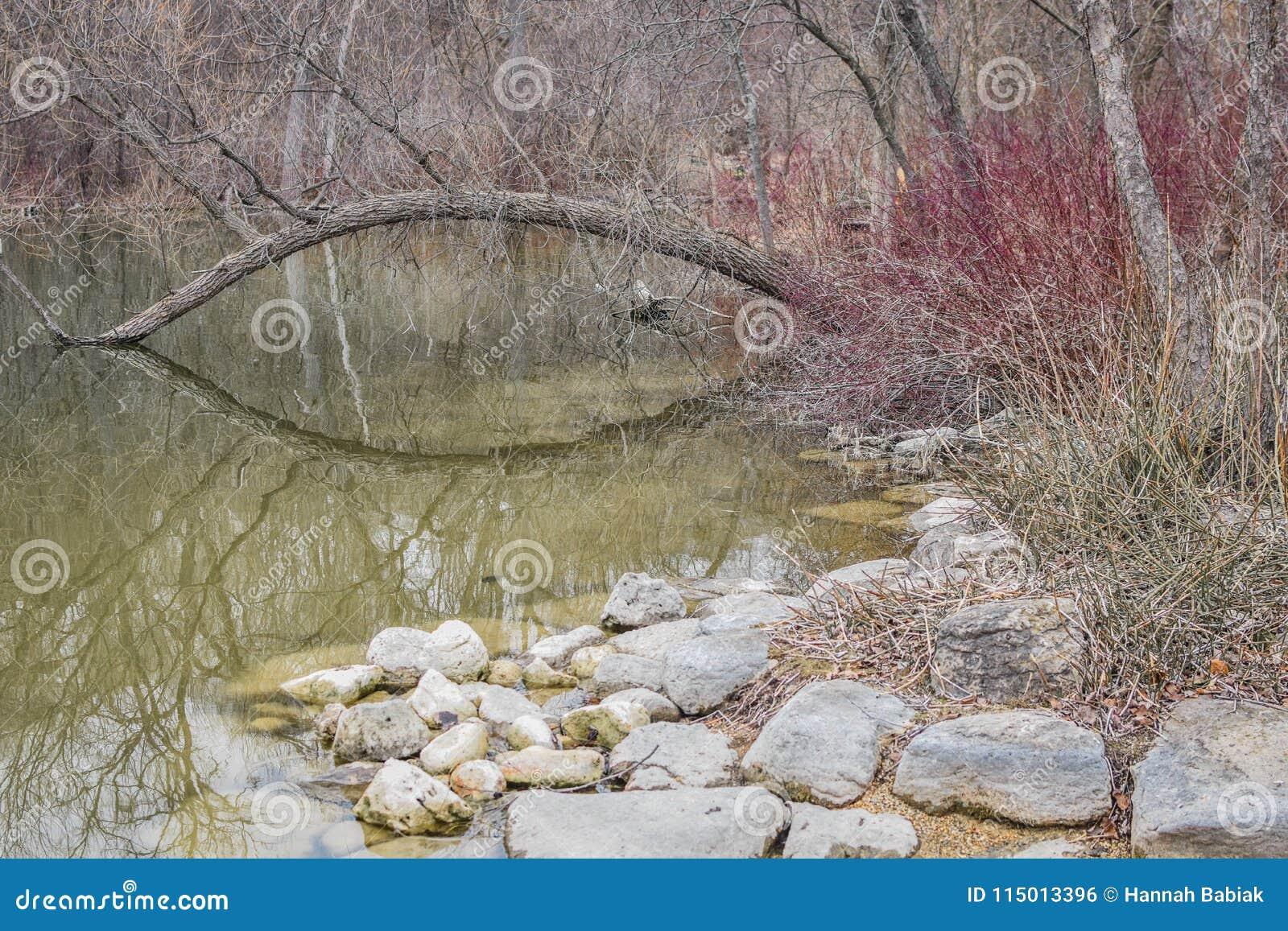 Αντανάκλαση λιμνών πάρκων λιονταριών - Janesville, WI