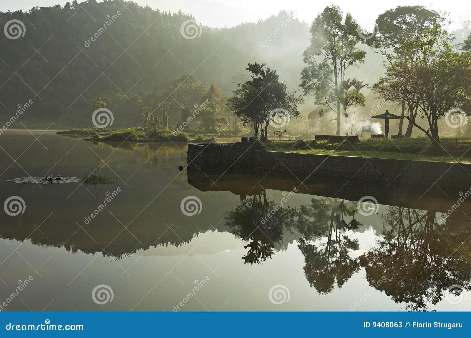 αντανάκλαση τροπικών δασών