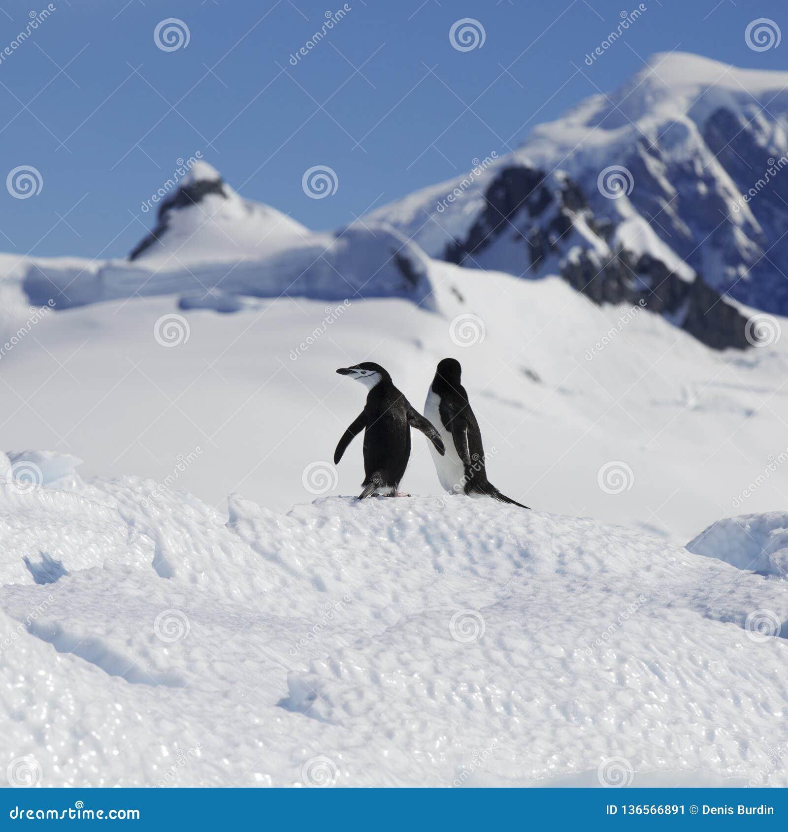 Ανταρκτική ακτή