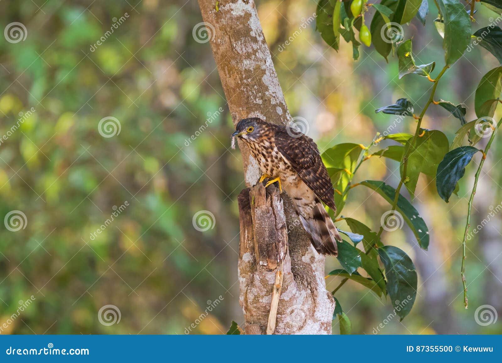 μεγάλο τριχωτό πουλί φωτογραφίες μεγάλη έβενο πίπα