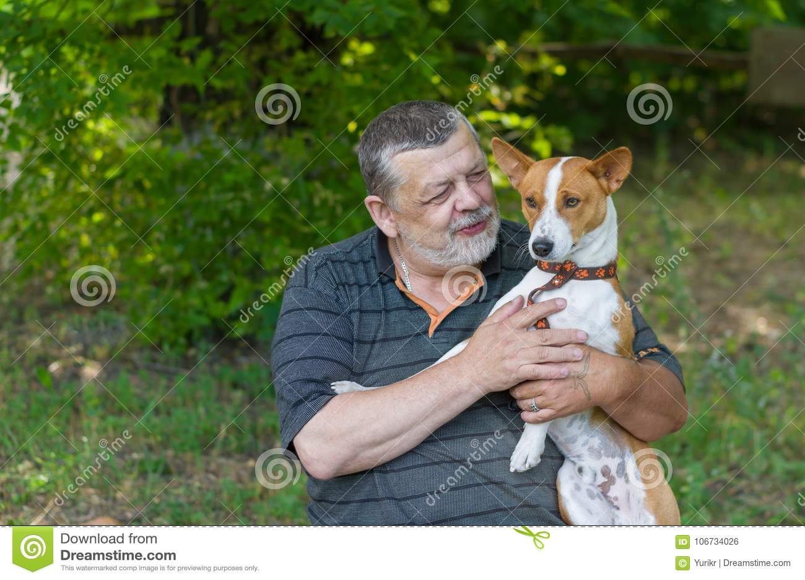 Ανώτερο άτομο που μιλά στο χαριτωμένο basenji σκυλιών του που παίρνει το στα χέρια στηργμένος στο θερινό πάρκο