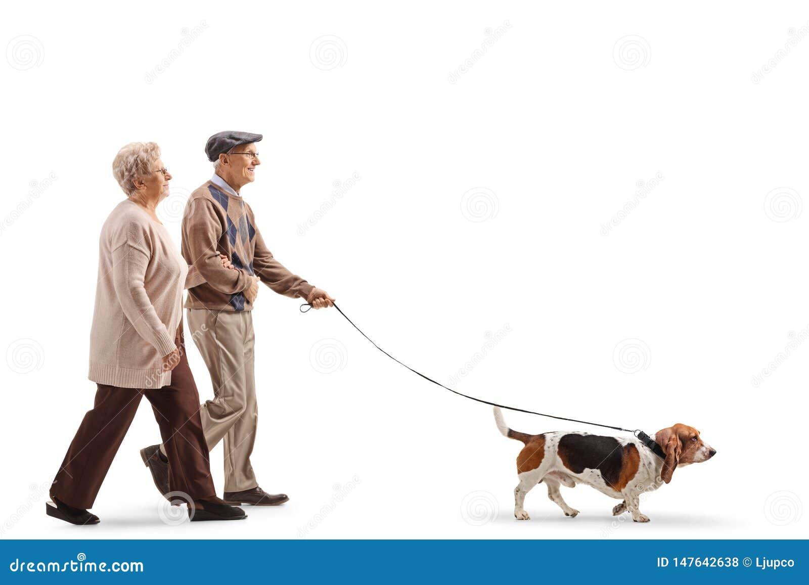Ανώτερο ζεύγος που περπατά ένα σκυλί κυνηγόσκυλων μπασέ