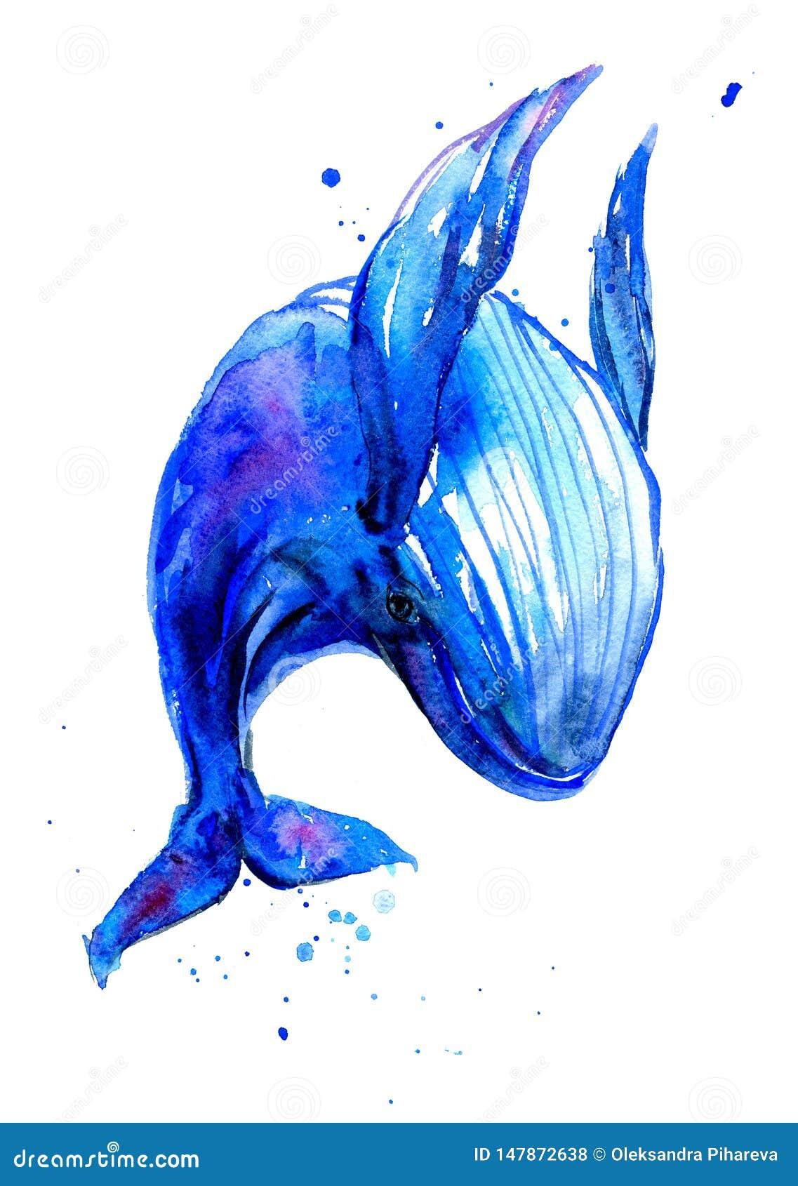 Απεικόνιση watercolor γαλάζιων φαλαινών Humpback Υποβρύχια πανίδα