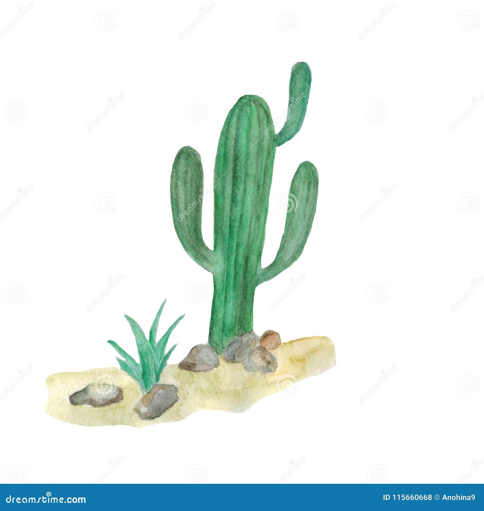 Απεικόνιση Watercolor των κάκτων στην έρημο