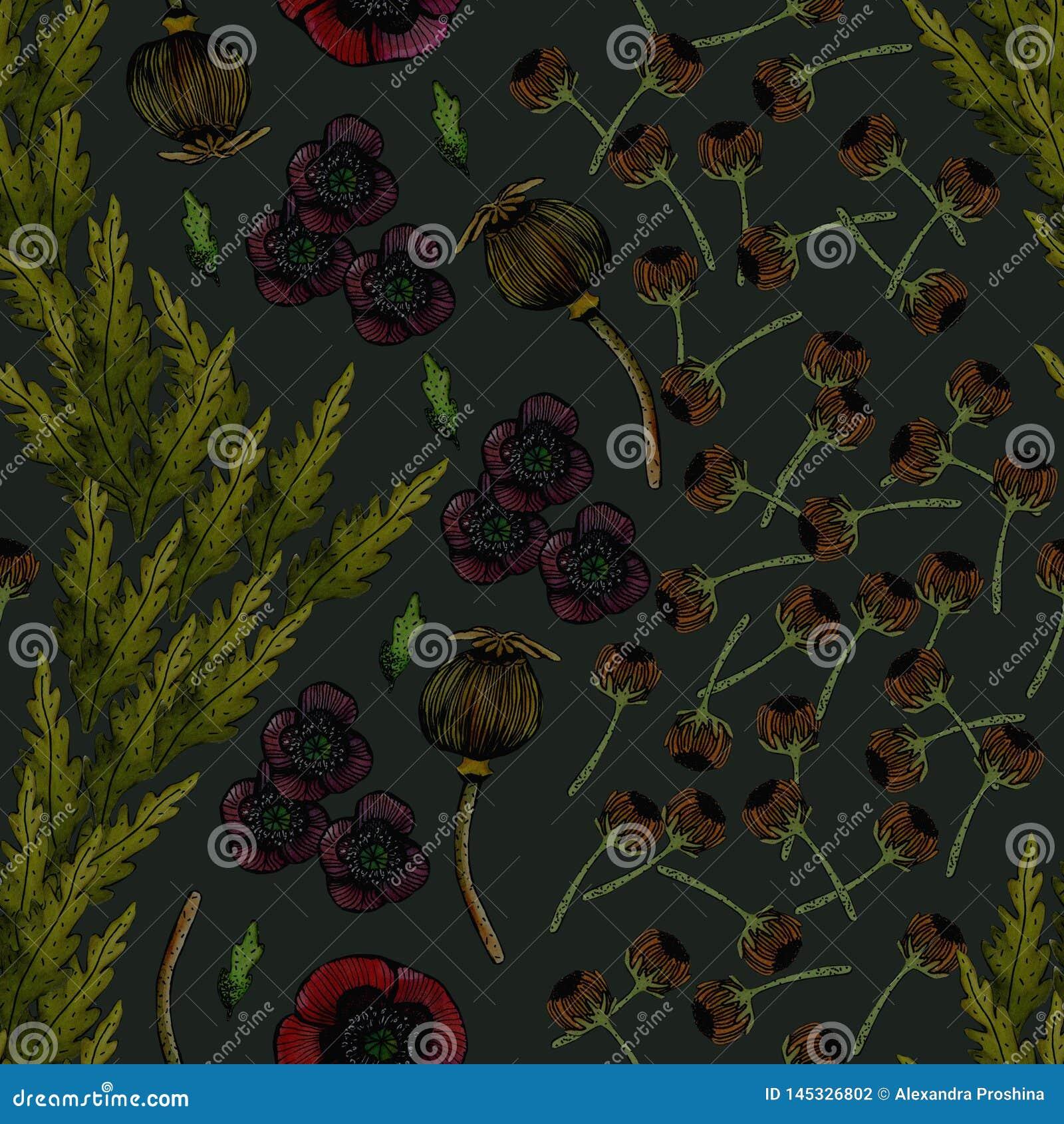 Απεικόνιση Watercolor των παπαρουνών