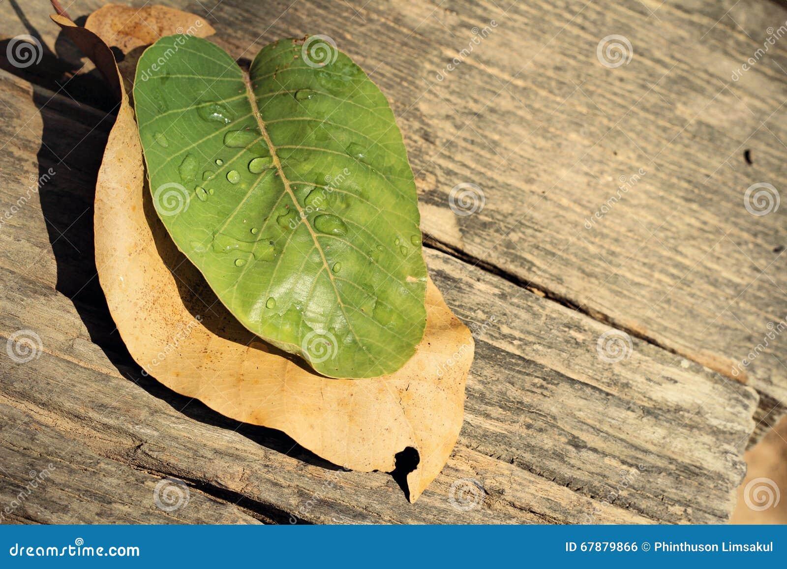Απελευθερώσεις ύδατος στα φύλλα