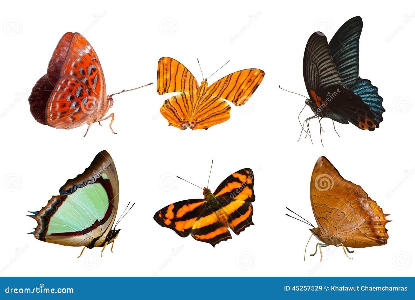 Απομονωμένη συλλογή πεταλούδων