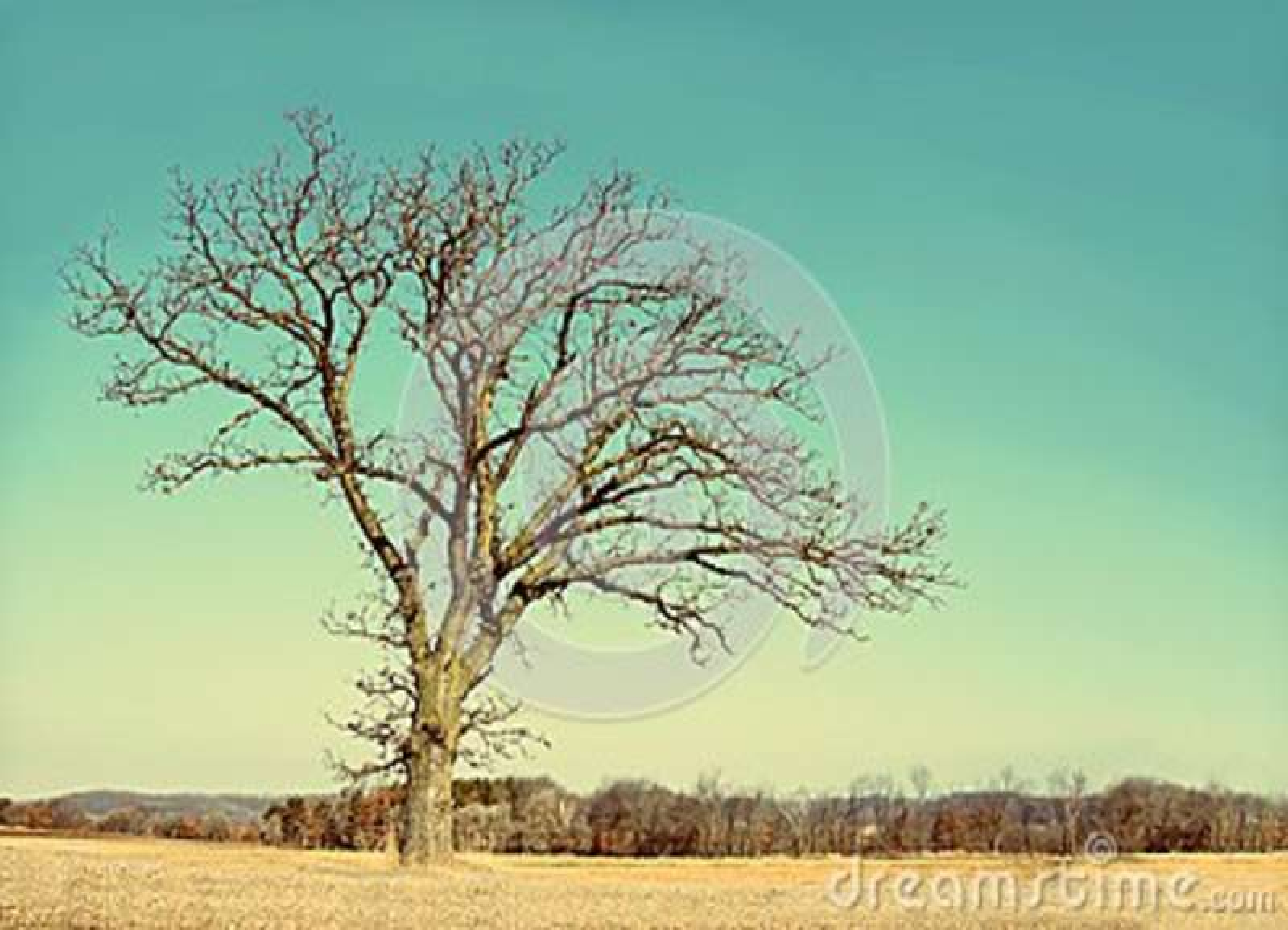 Απομονωμένος γυμνός διακλαδίστηκε χειμερινό δέντρο στη χώρα