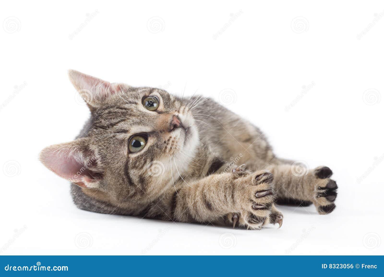 απομονωμένο γατάκι ριγωτό