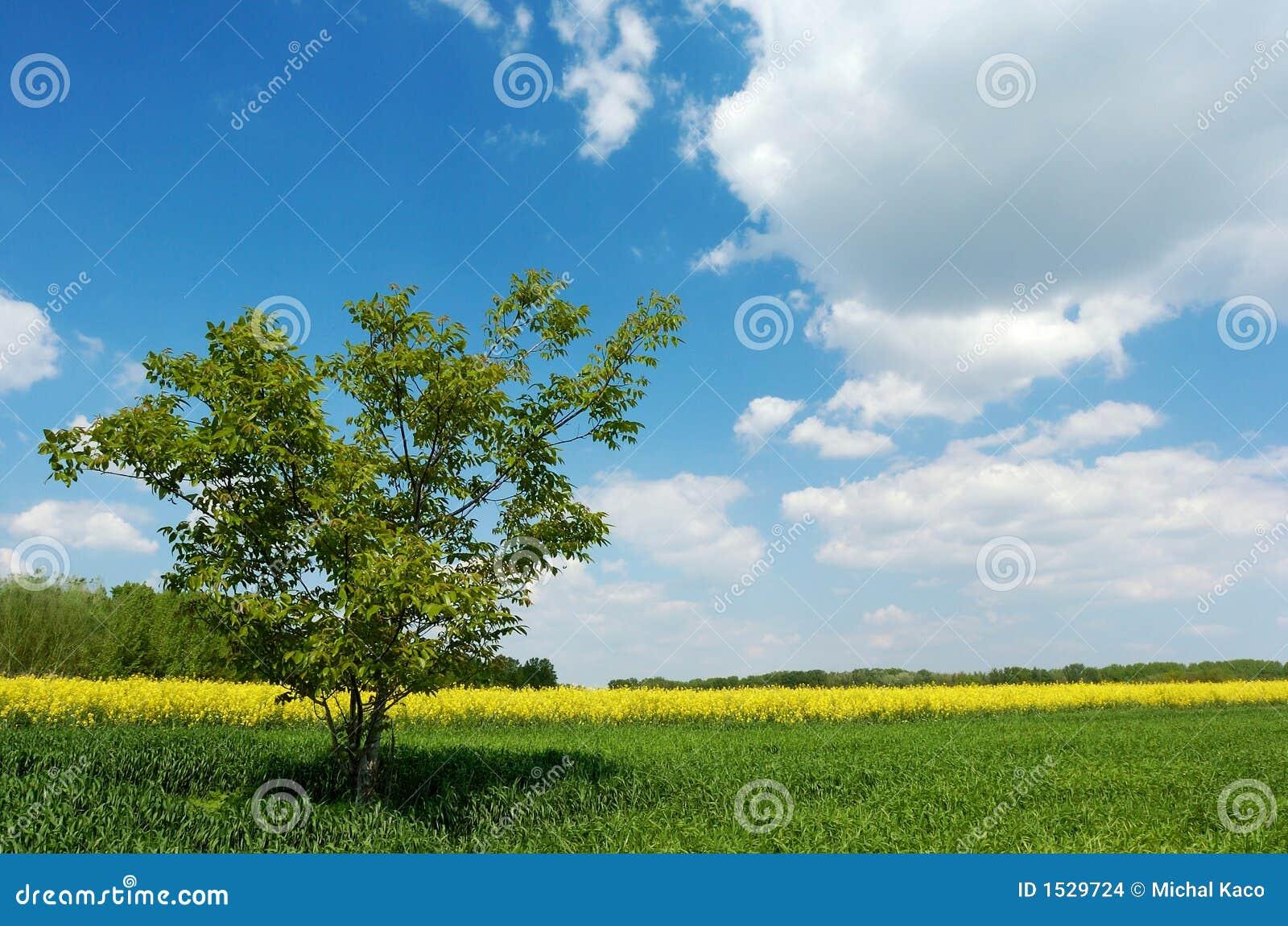 απομονωμένο δέντρο πεδίων