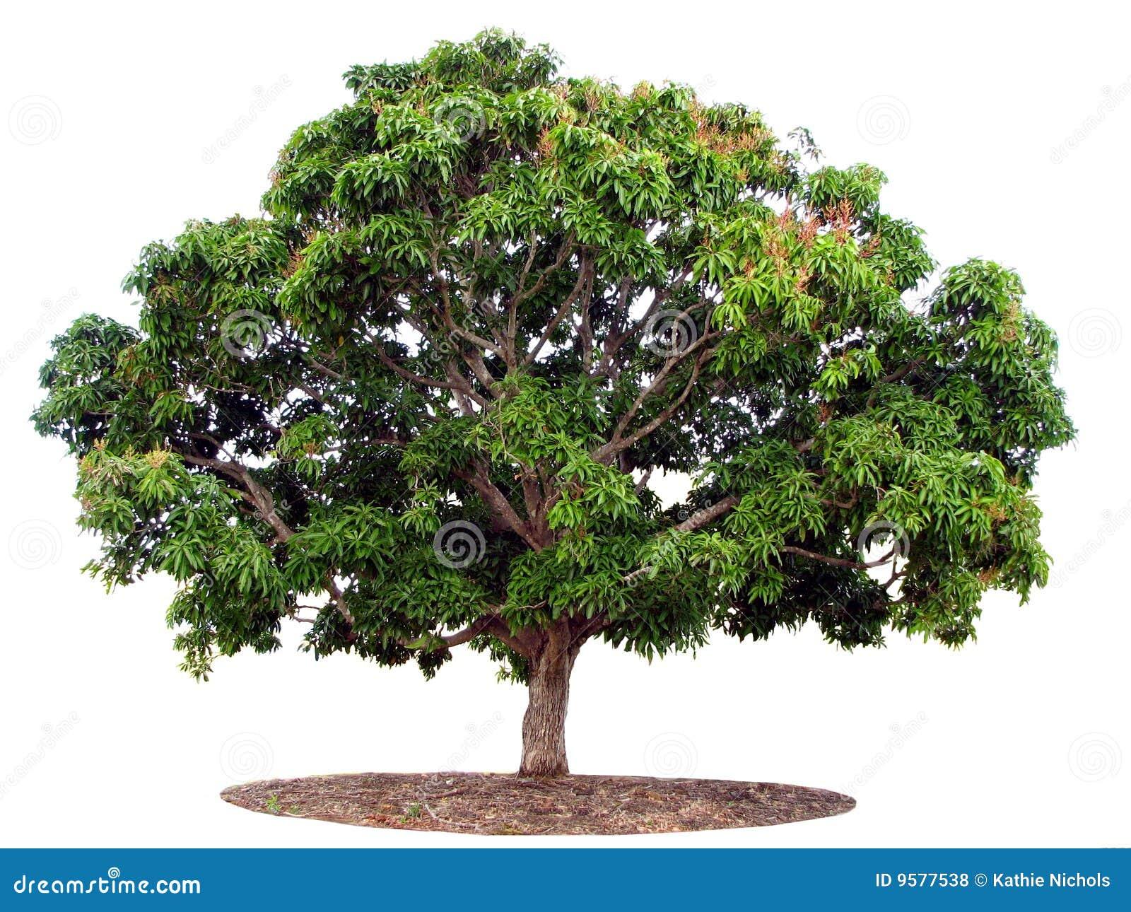 απομονωμένο λευκό δέντρων