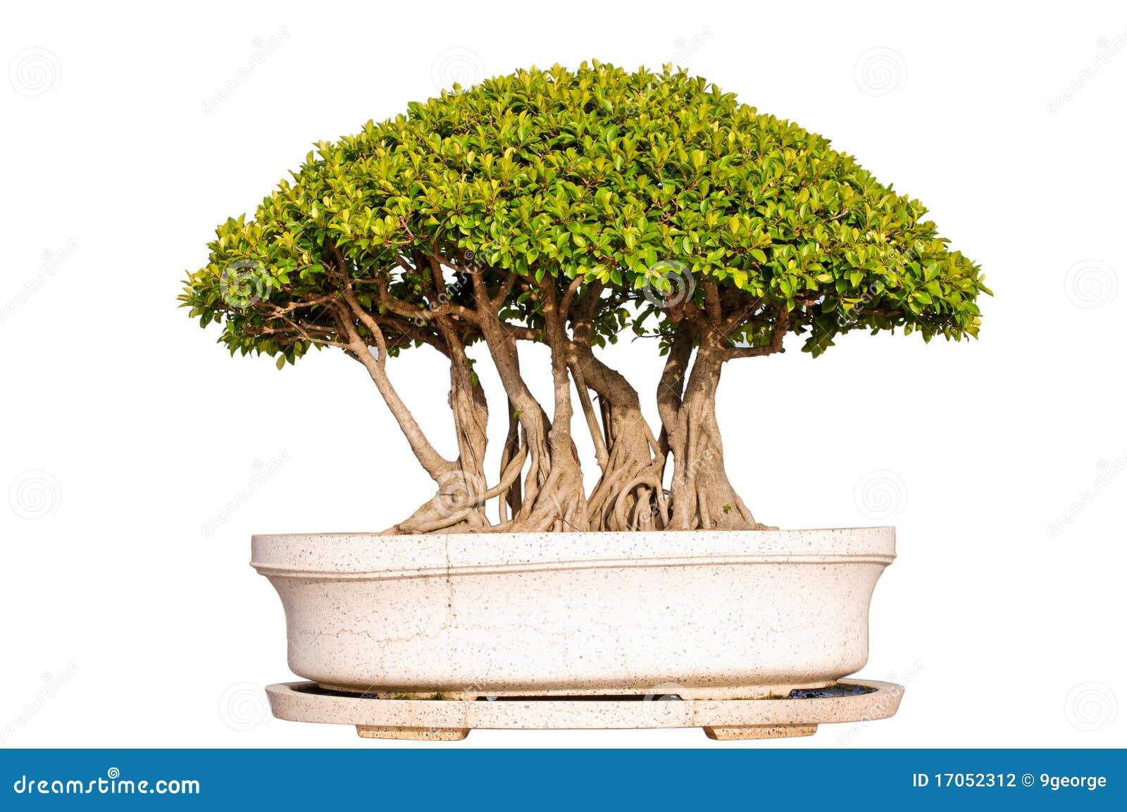 απομονωμένο λευκό δέντρω&nu