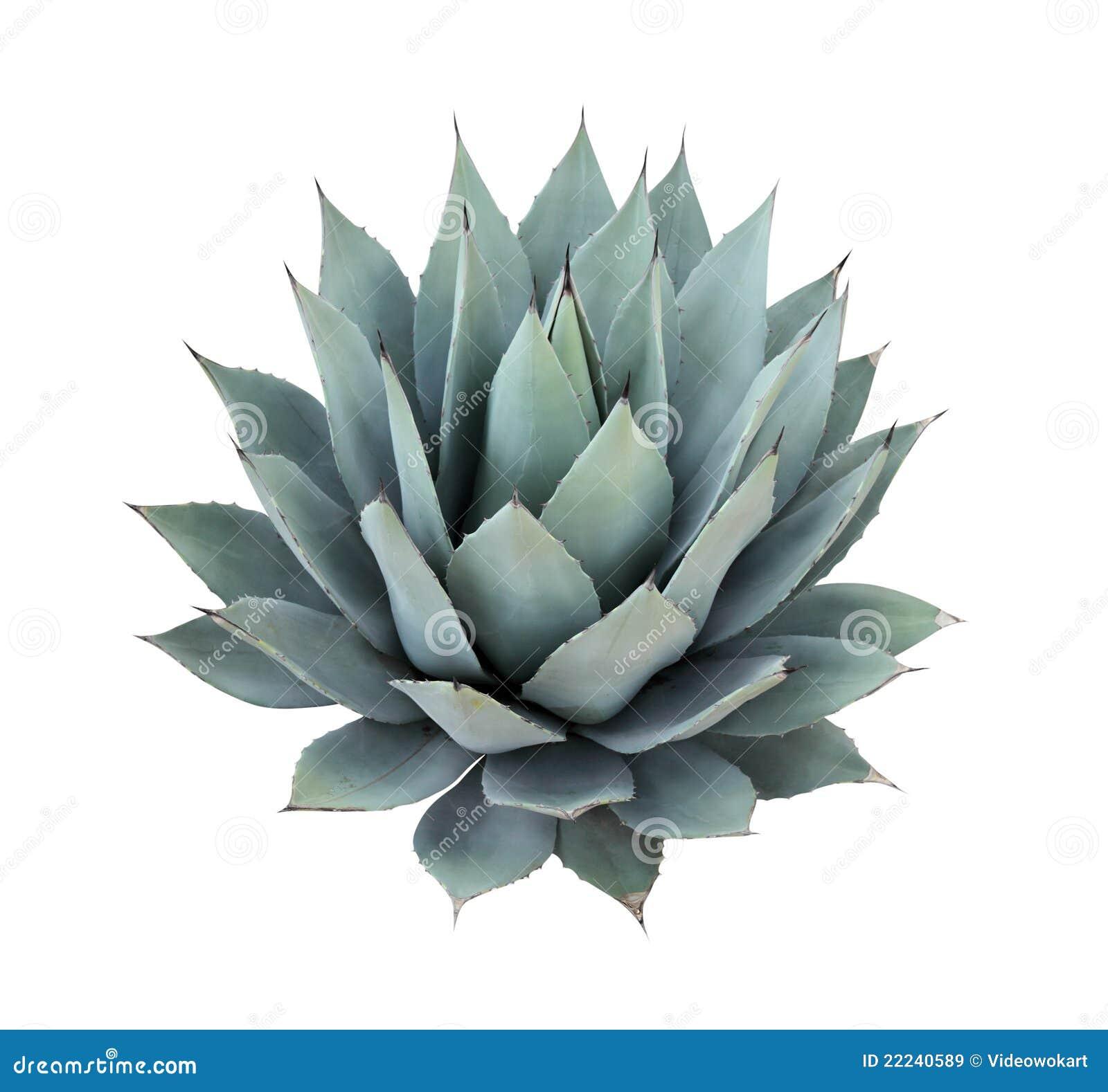 απομονωμένο λευκό φυτών α