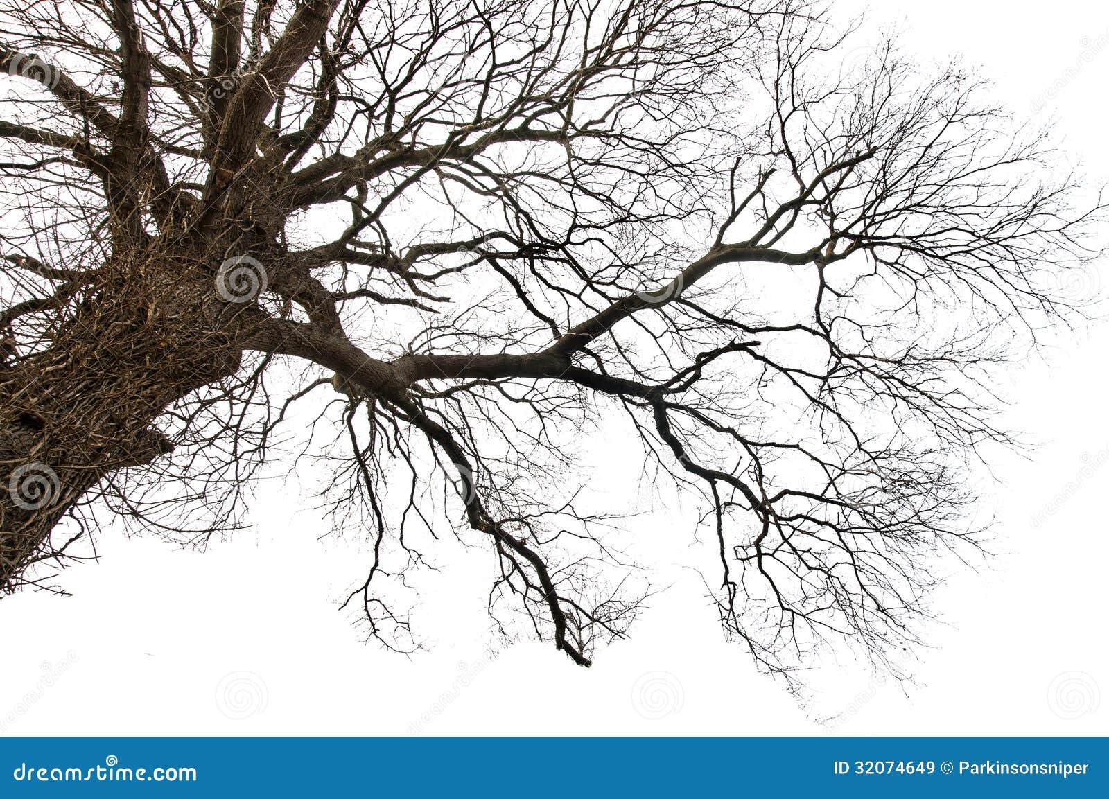 Απομονωμένο νεκρό δέντρο
