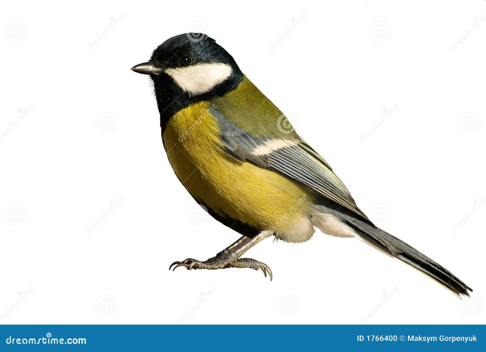 απομονωμένο πουλί tomtit λευ&k