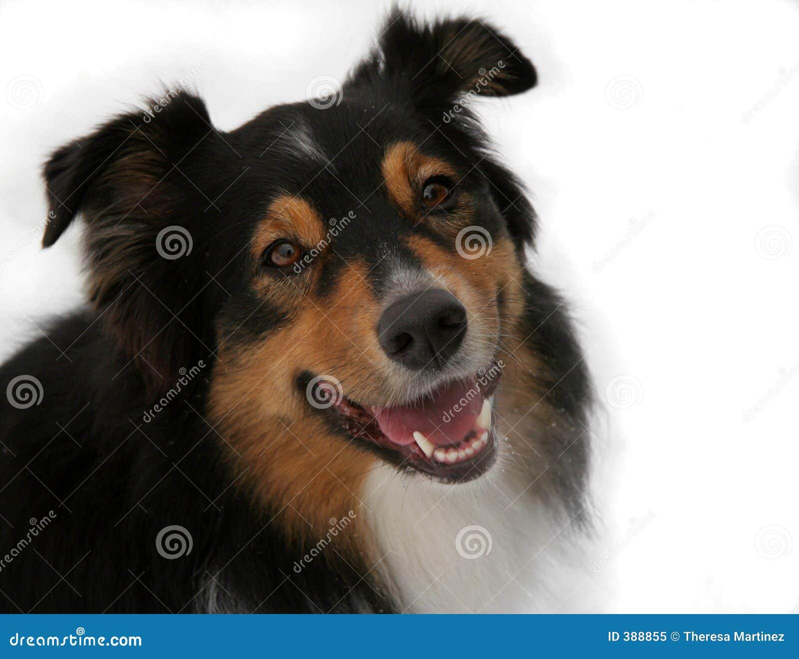 απομονωμένο σκυλί πορτρέτ