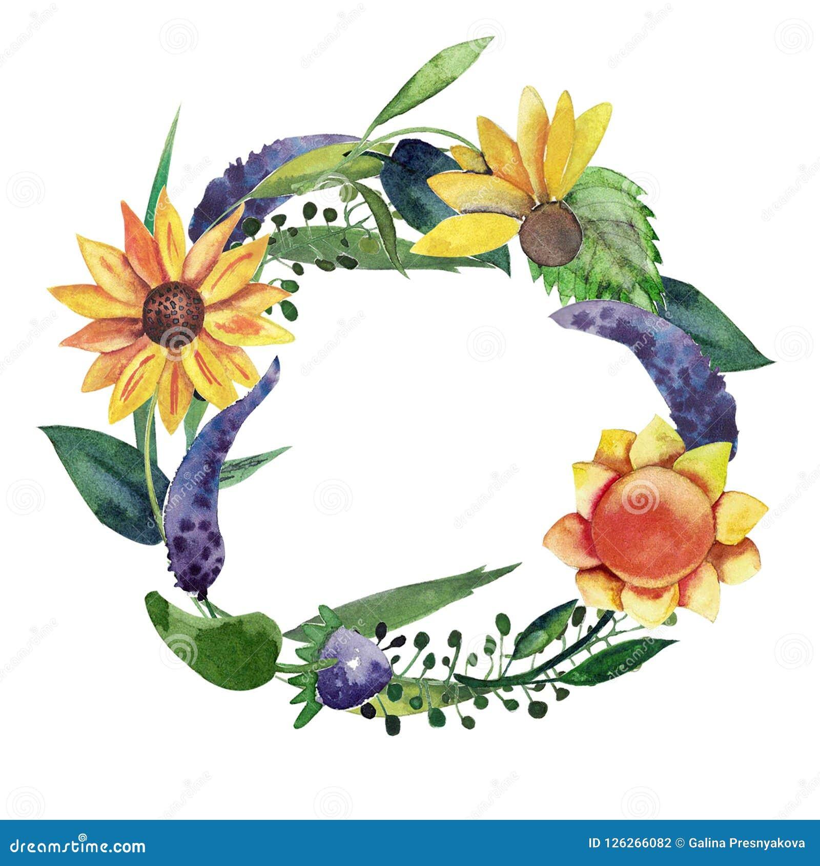 Απομονωμένο Watercolor στεφάνι με τους ηλίανθους, τα ιώδη λουλούδια, τα φύλλα και τα χορτάρια