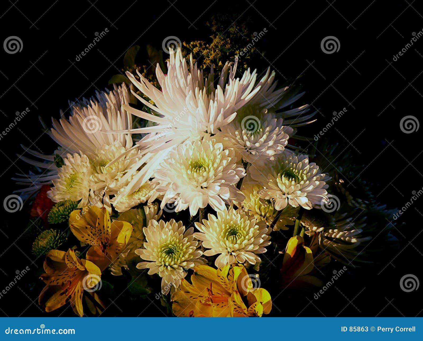 απόγευμα floral