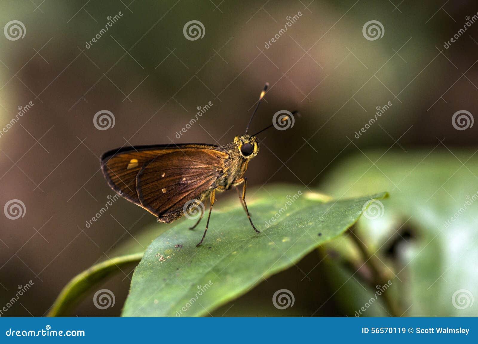 Download από έτοιμο πάρτε στοκ εικόνα. εικόνα από έντομο, σκώρος - 56570119