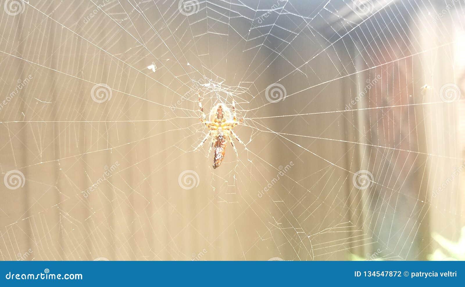 Αράχνη, Ιστός στη βροχή