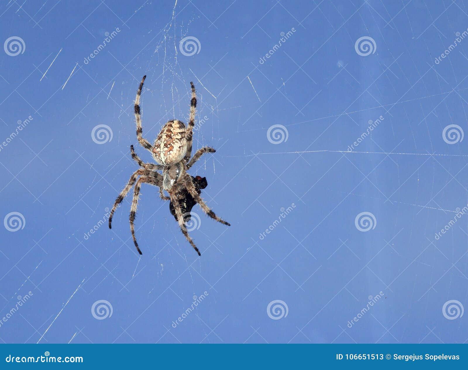 Αράχνη και θύμα