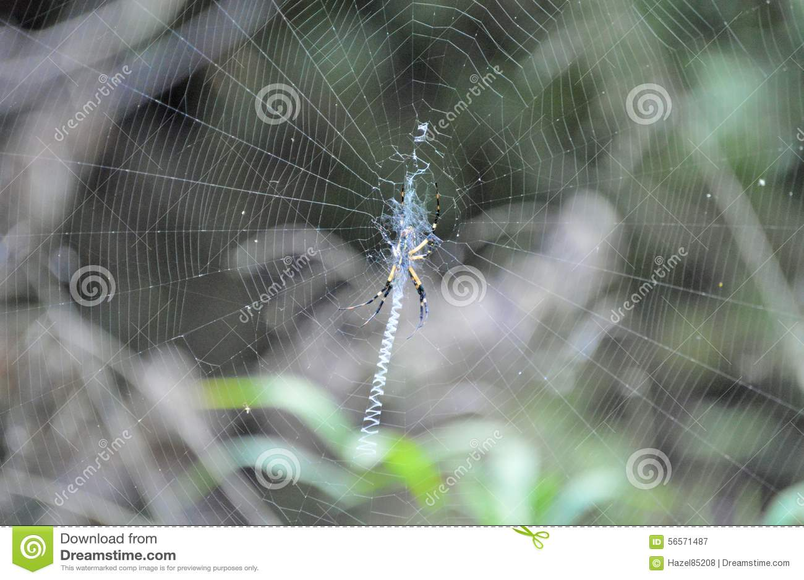 Download Αράχνη στον Ιστό που δημιουργεί το σχέδιο Στοκ Εικόνα - εικόνα από δάσος, λεπτομέρεια: 56571487