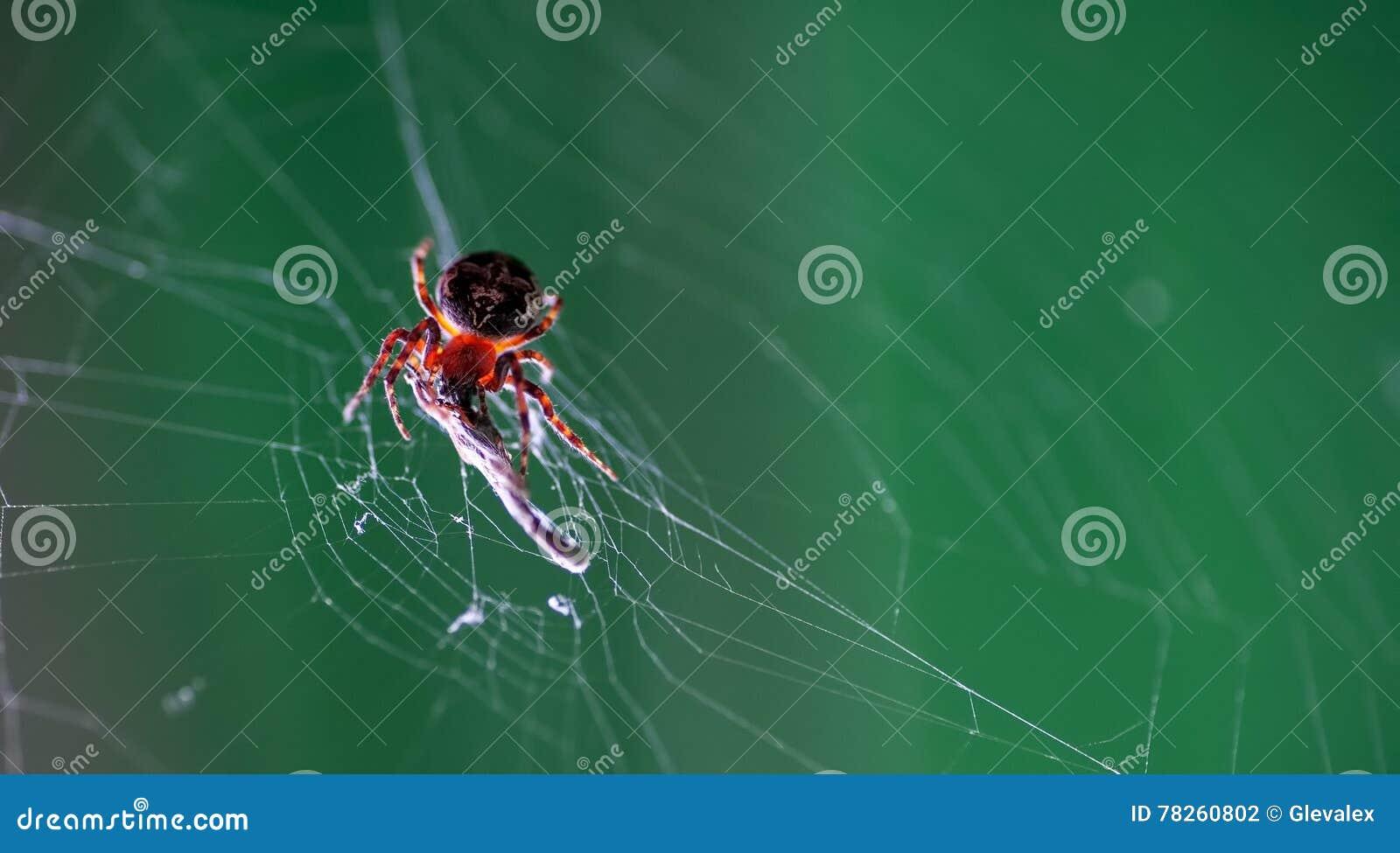 Αράχνη στον Ιστό του που τρώει κάποιο έντομο
