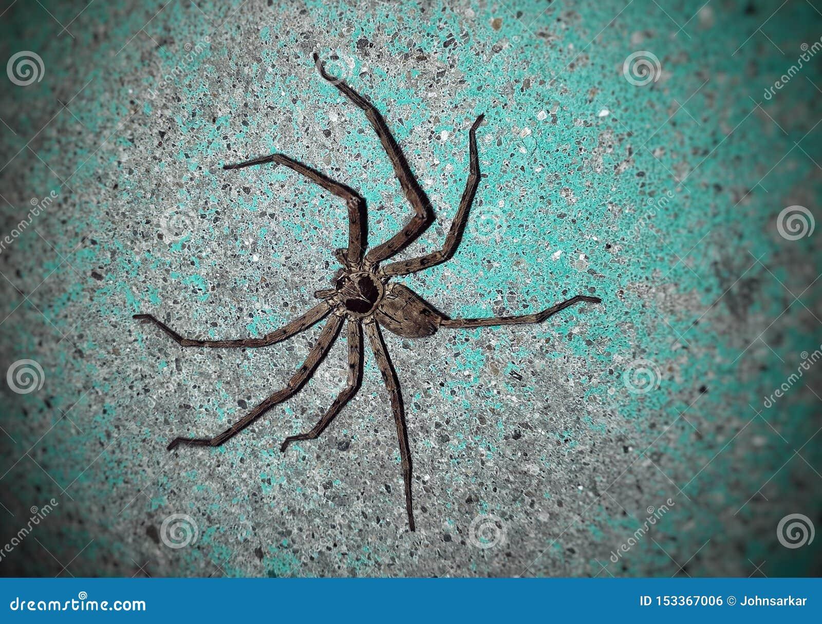 Αράχνη στον τοίχο
