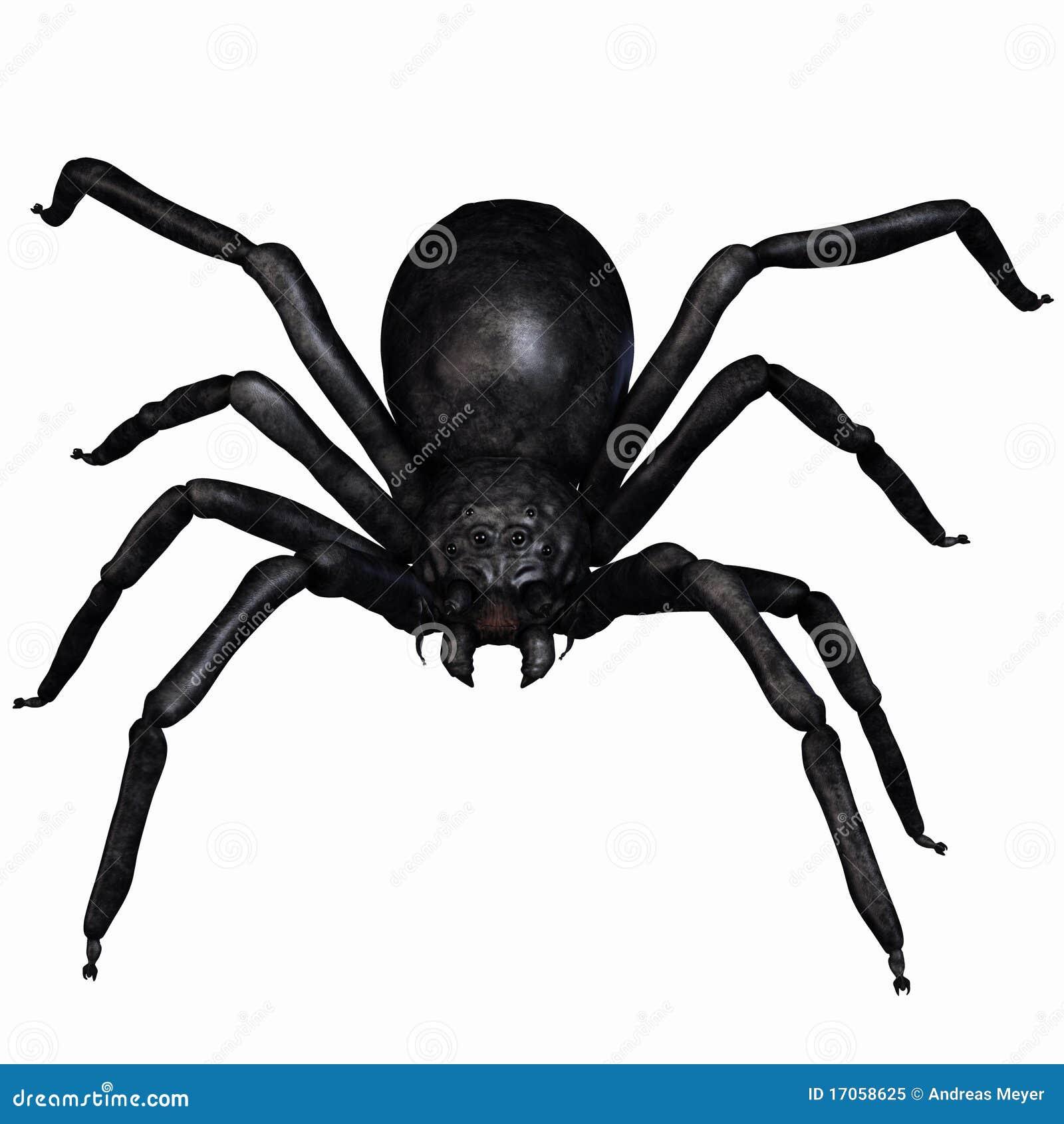 αράχνη φαντασίας