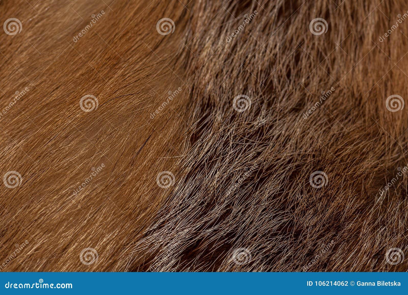 Αριστοκρατική και πολυτελής κόκκινη γούνα αλεπούδων