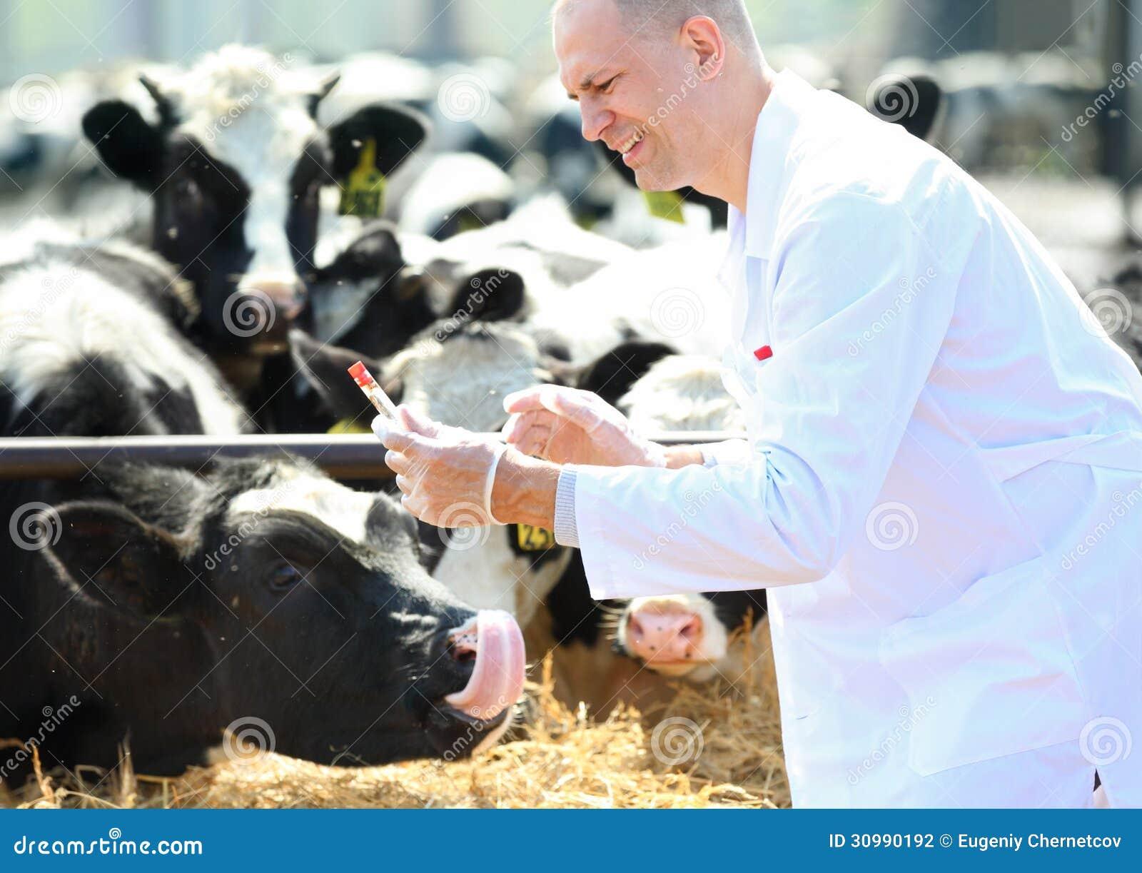 Αρσενικός κτηνίατρος αγελάδων   το αγρόκτημα παίρνει αναλύει