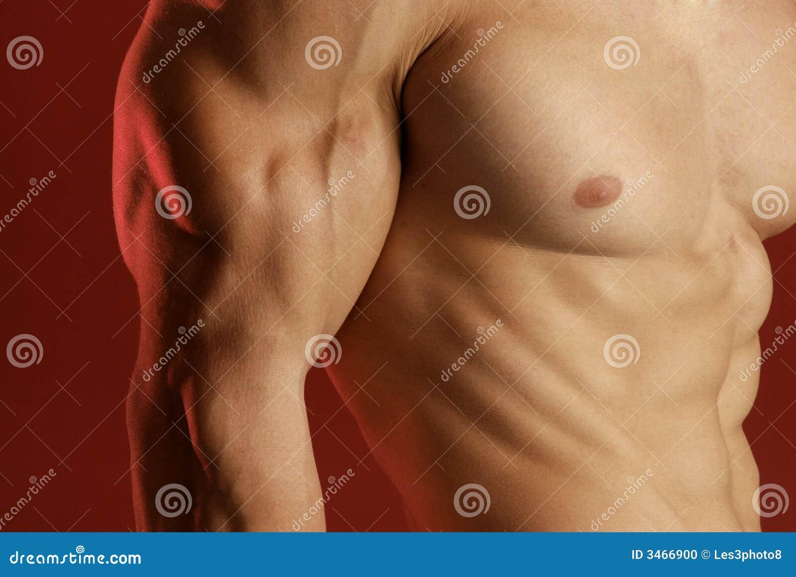αρσενικός μυς