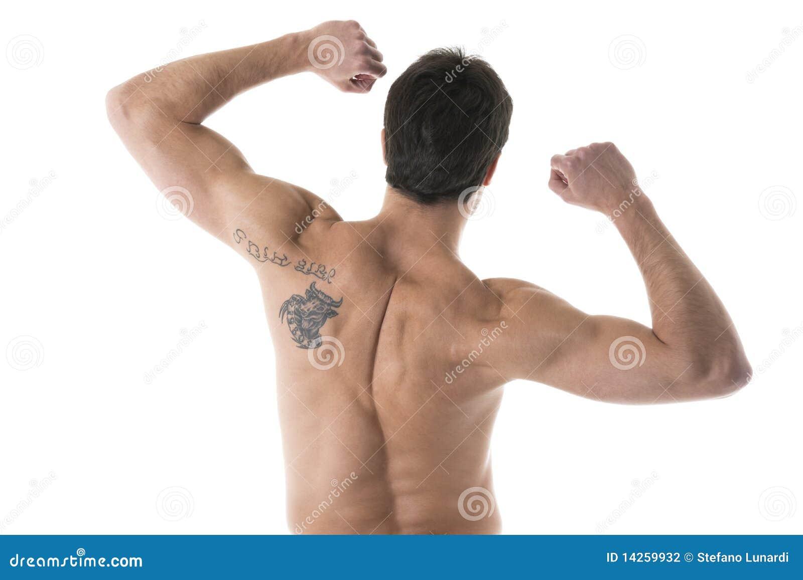 Αρσενικό Muscualer