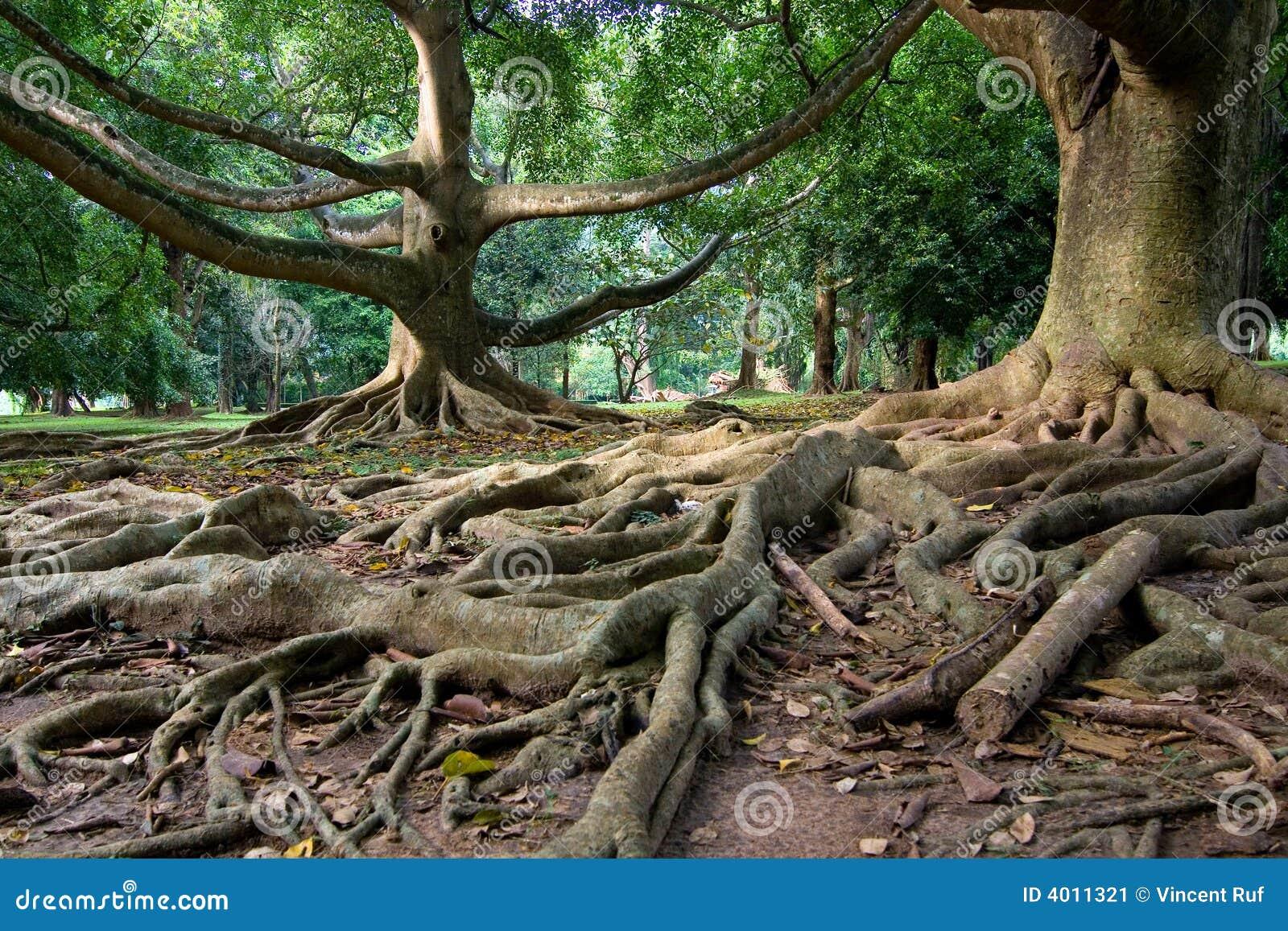 αρχέγονο τροπικό δάσος