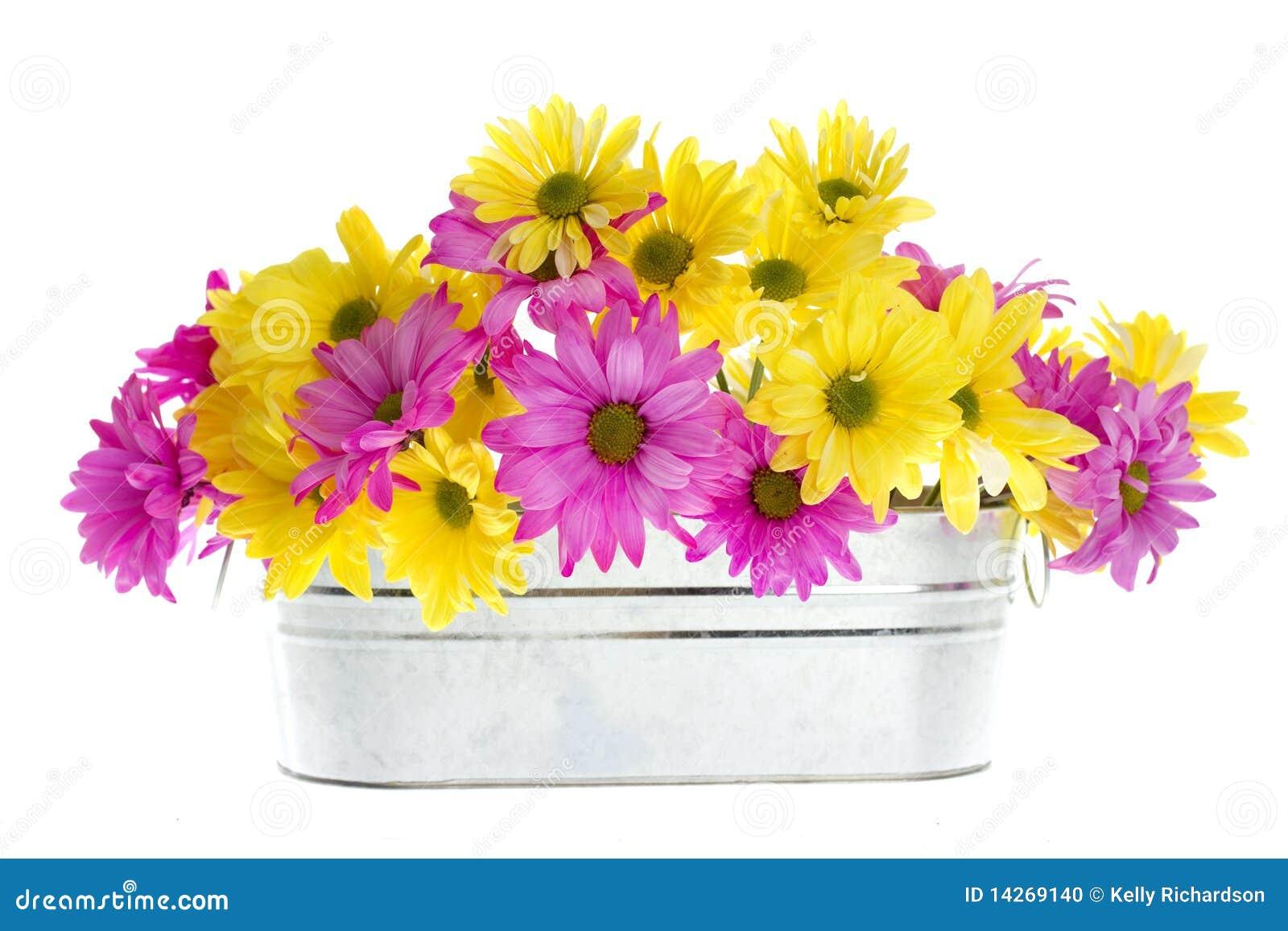 ασήμι shasta λουλουδιών μαργ&al