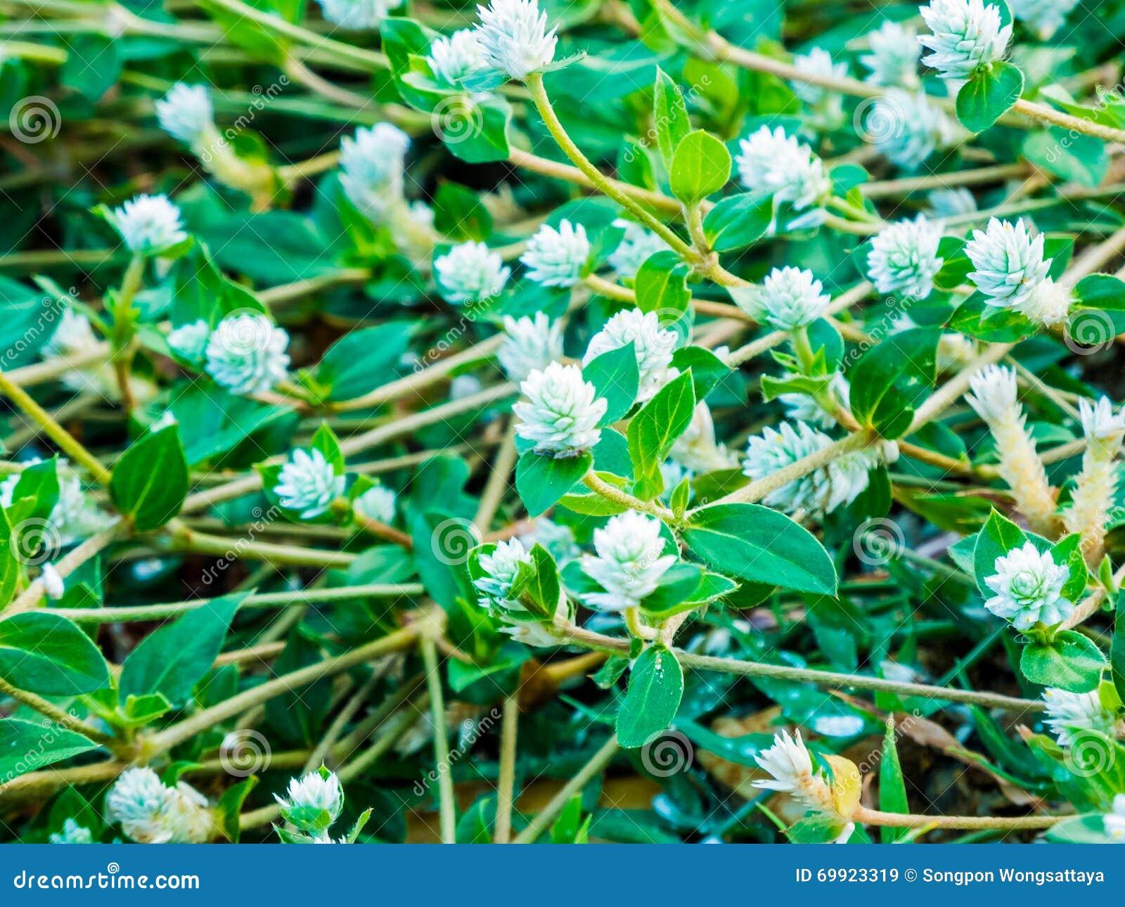 Ασημένια στηρίγματα λουλουδιών